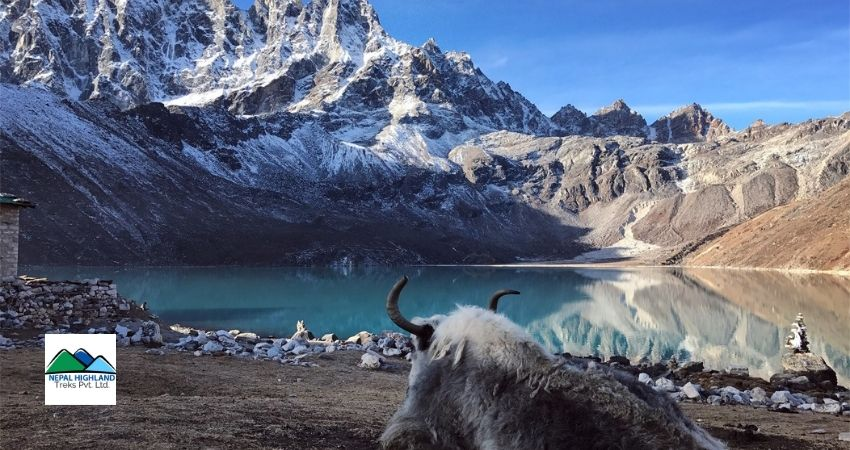 Gokyo Lake Trekking for Nepali