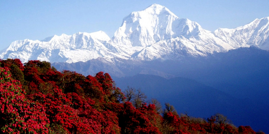 5 Best Trekking and Tours in Nepal after Covid