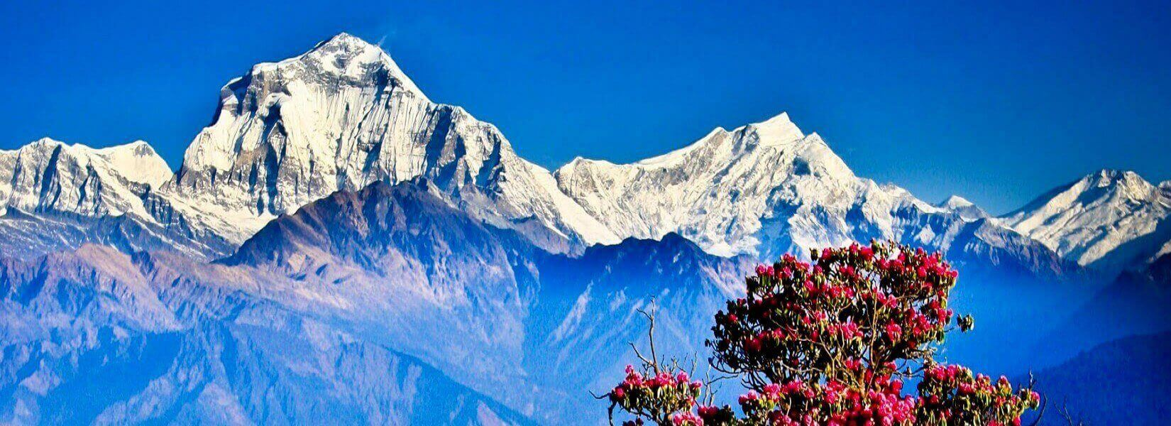 Mount Dhaulagiri From Poonhill
