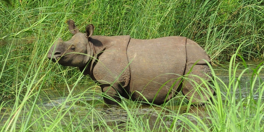 Rhino in Bardia National Park