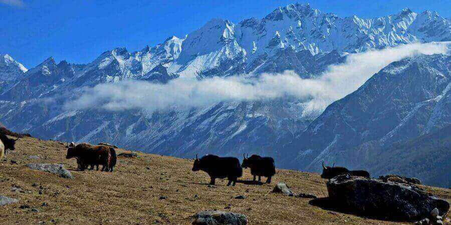 Langtang is ready for Trekking and Tours