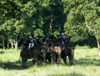 Elephant back safari in Chitwan National park
