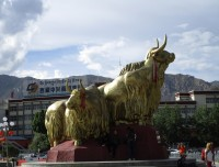 Golden Yak in Lhasa