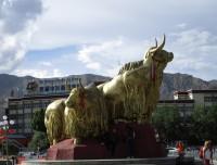 Golden Yak in Lhasa
