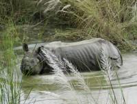 Rhino During Jungle Safari