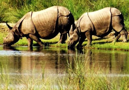 4 Nights 5 days Bardia Jungle Safari Tour